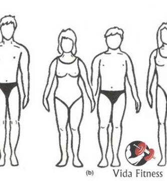 tipos de cuerpo