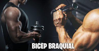 Ejercicios para estimular el bícep braquial